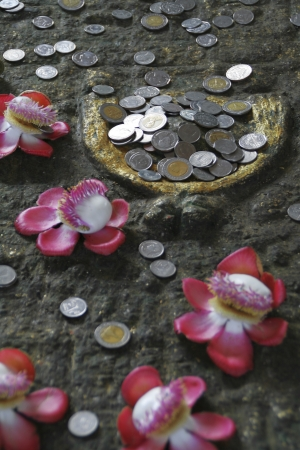 Conceptual image of coins and flowers Stock Photo - 14071988