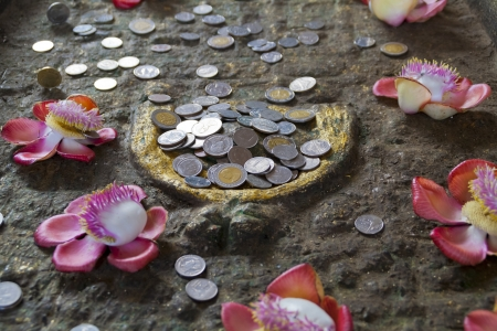 moneyed: Conceptual image of coins and flowers Stock Photo