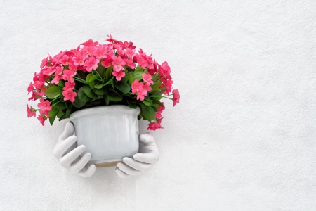 Pink flower gift decoration on wall photo