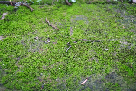 dankness: Green mossy ground