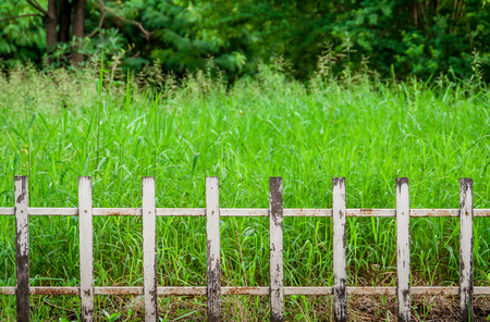 Old fence in grass field photo
