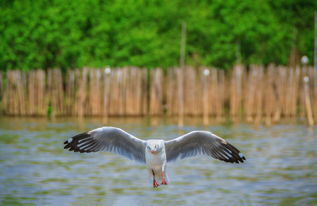 A seagull is seeking for food Stock Photo