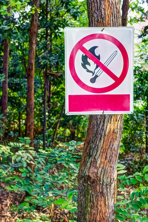 no fires: No fires sign in woodland forest