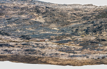 spoiling: Wood timber decay isolated on white background Stock Photo
