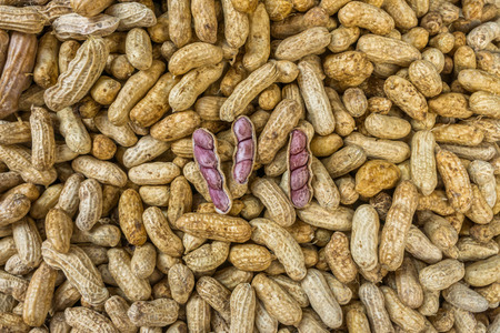 bean family: The peanuts for sale in Thai fresh market. The peanut or groundnut or Arachis hypogaea is a species in the legume or bean family (Fabaceae).