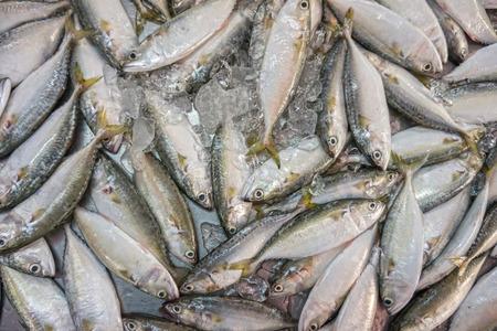 Rastrelliger brachysoma or Short mackerel for sale in Thai fresh market photo