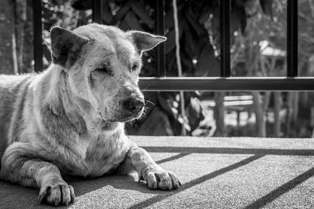 unsettled: Poor Asian dog in black and white image
