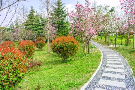 The walkway in a garden