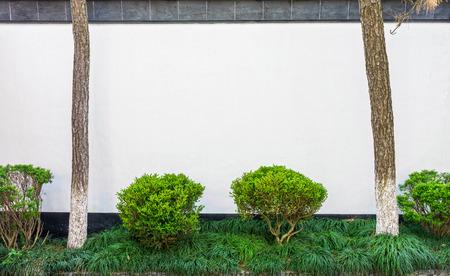 small garden: Small garden with white concrete wall
