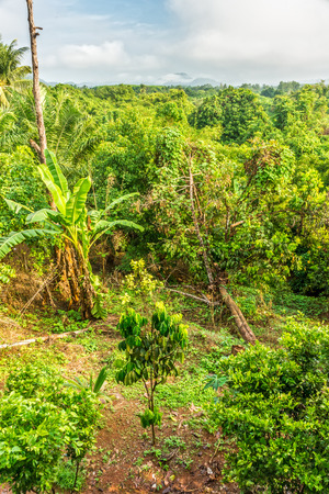 southern thailand: The tropical forest in Southern Thailand