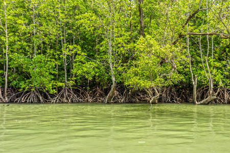 southern of thailand: The seaside and mangroves forest in Phang Nga bay, Southern Thailand. Stock Photo