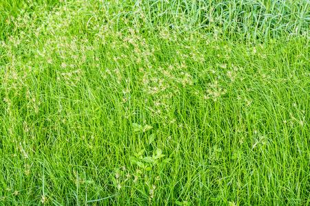 wasteland: Green grass field in wasteland
