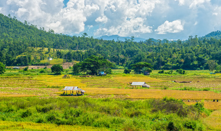 The natural landscape view of paddy field with local people do paddy farming