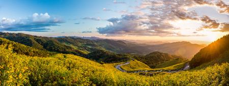 blossoming yellow flower tree: Landscape panorama view of Tithonia diversifolia field on Doi Mae Au Kho mountain range in the evening. The famous natural landmark in Northern Thailand.
