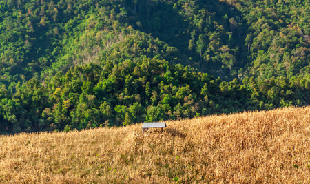 mountaintop: Hut in maize field. It is on mountaintop in Nan province countryside of Thailand Stock Photo