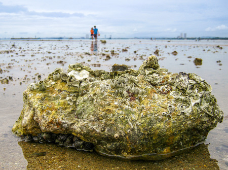 Tide pools on the beach are habitats of uniquely adaptable animals in Sattahip district Thailand Stock Photo