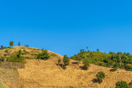 mountaintop: Natural landscape view of mountaintop with maize field and clear blue sky. This mountain ranges are in Nan province countryside of Northern Thailand. Stock Photo