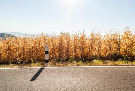planta de maiz: Campo de maíz es una planta cultivada por la comida al lado de la carretera en la provincia de Nan campo de Tailandia Foto de archivo