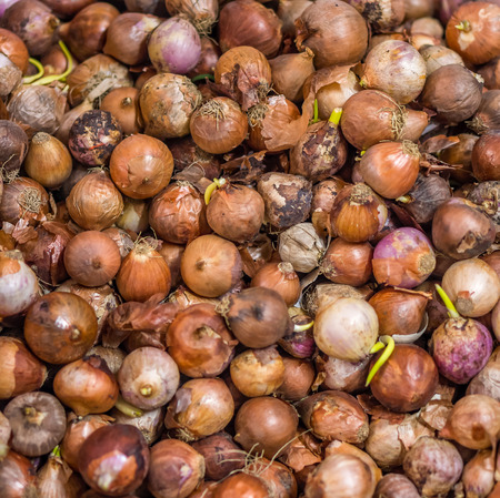 l agriculture: Heap of bulb onions Allium cepa L. for retail sale in Thailand fresh food market Stock Photo