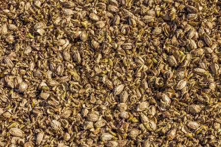 desechos organicos: Los residuos org�nicos de desecho de la fruta Foto de archivo
