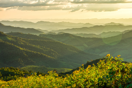 mountain ranges: Natural landscape view of Tithonia diversifolia field and mountain ranges in the evening, Northern Thailand