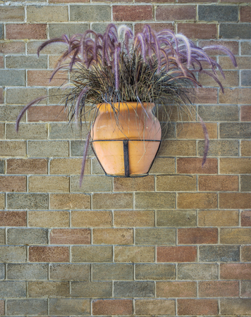 earthen wall: Hanging widemouthed earthen jar of dry Pennisetum on a bick wall. It is used for interior or exterior decoration. Stock Photo