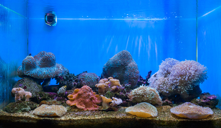 brine: The art of aquarium. A tank filled with brine water for keeping live underwater animals