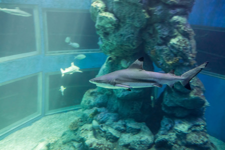 brine: Shark in a aquarium. A tank filled with brine water for keeping live underwater animals.
