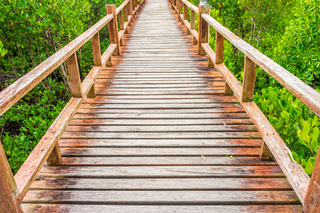 abundant: Wooden walkway in abundant mangrove forest. For nature walks to study coastal plants and animals. Stock Photo