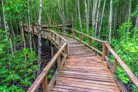 abundant: Winding wooden walkway and abundant mangrove forest in Southern Thailand. For nature walks to study coastal plants and animals.