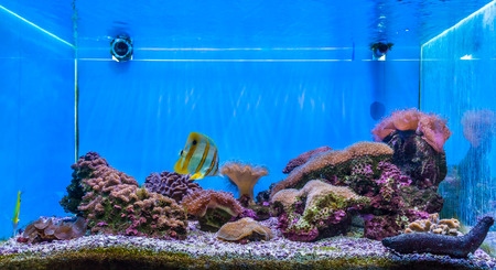 live coral: Coral reef ecology in aquarium. A tank filled with brine water for keeping live underwater animals