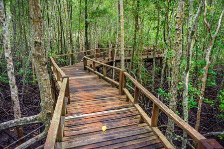 abundant: Winding wooden walkway in abundant mangrove forest of Southern Thailand. For nature walks to study coastal plants and animals. Stock Photo