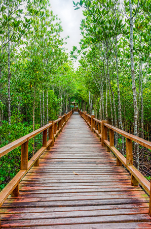 abundant: Straight wooden walkway in abundant mangrove forest of Thailand. For nature walks to study coastal plants and animals.