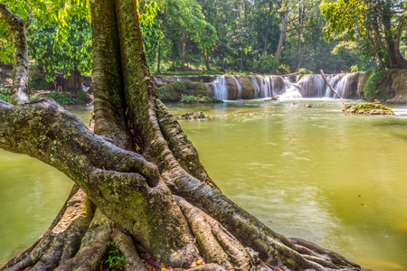 namtok: Natural trunk of big old tree in Namtok Chet Sao Noi waterfall. It is small waterfall in Saraburi province, Thailand.