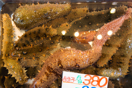 leathery: Sea cucumbers in water container  for retail sale in Japanese fresh food market. They are marine animals with a leathery skin.