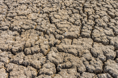 depletion: Dry cracked soil of levee of salt evaporation pond. It is mixed up with shells.