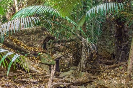 wilds: Rocks and trees in seasonal tropical forest. The jungle is in Thailand, Asia.