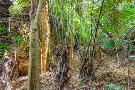 daunting: Trees in seasonal tropical forest. The jungle is in Thailand, Asia. Stock Photo
