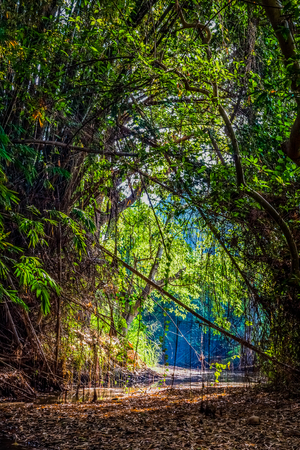 overuse: Natural watercourse with tunnel trees in hot summer. The river run dry from overuse in Thailand. Stock Photo