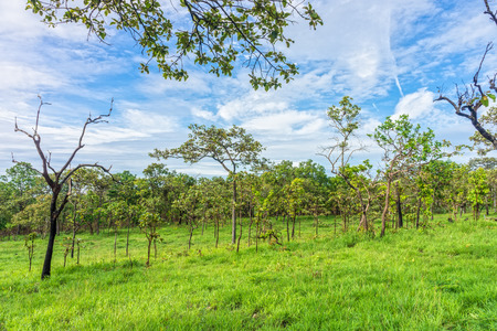 Landscape view of tropical savanna with cloudy sky. A mixed woodland grassland ecosystem in Thailand. Stock Photo