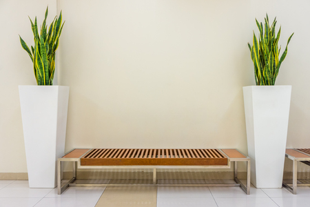 Modern bench and vase of Sansevieria trifasciata plant. The interior decoration in living hall.