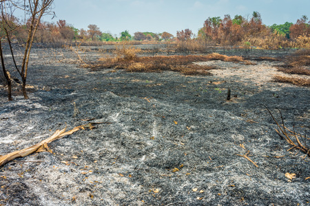Burnt agricultural field. The area was damaged from bushfire.