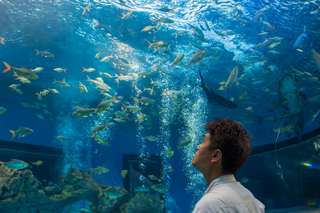 aquaria: Man or tourist is looking at fishes in freshwater aquarium. He is an Asian people.
