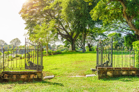 Outdoor open vintage metal gate in a garden. Showing a landscape view to big Albizia Saman tree.