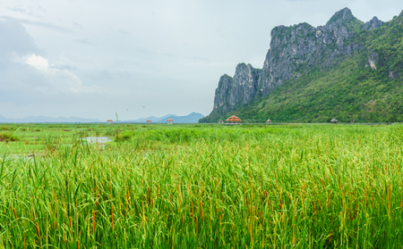 Outdoor pavilions in freshwater marsh. They are at Bueng Bua Sam Roi Yot National Park, Prachuap Khiri Khan, Thailand, Southeast Asia.