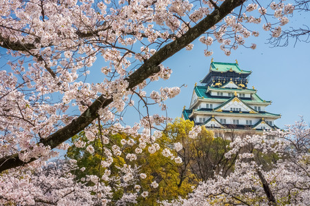 Main tower of Osaka Japanese Castle with cherry blossom flowers view from Nishinomaru Garden. The old heritage building and most famous landmark in Osaka, Japan, Asia.
