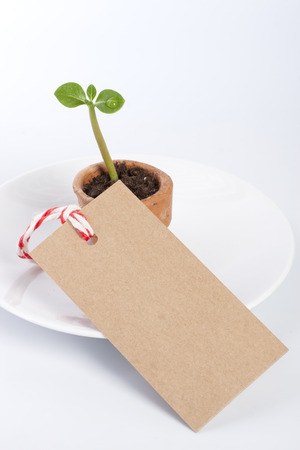 A young seedling in clay pot on a white background with paper tag  photo