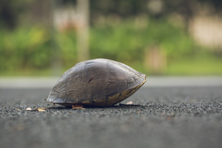 Turtle is shy inside shell on the floor. Animal abstract background.