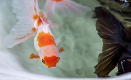 Selective focus on golden fish in well, abstract animal background. Stock Photo