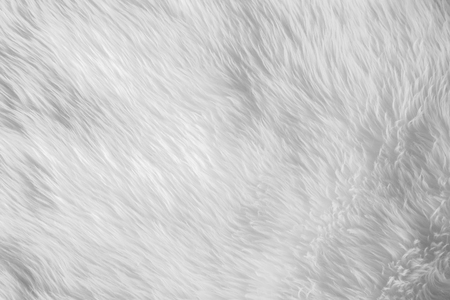 White fur texture, close up on detail of fur, for mapping 3d object or abstract background. Stock Photo